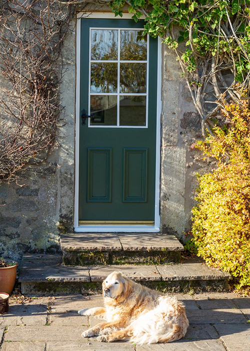 Traditional doors with a home dog
